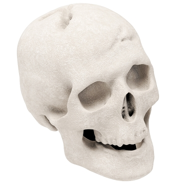 Regal Flame Human Skull Gas Log for Indoor or Outdoor Fireplaces Fire Pits Halloween Decor - White